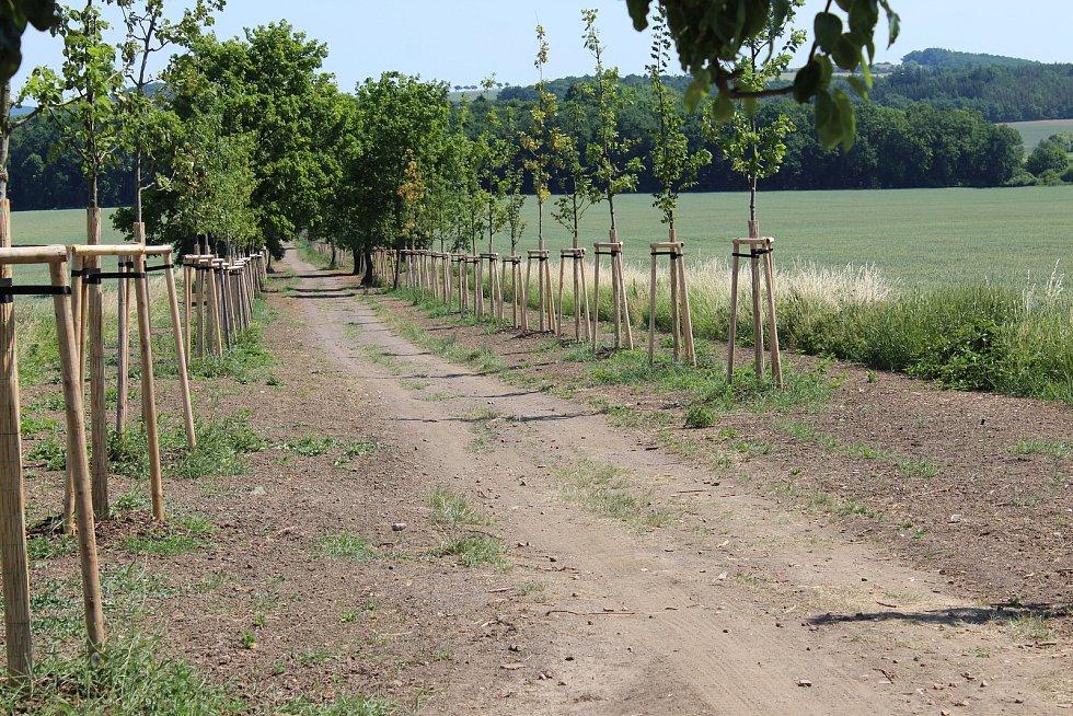 Téměř 800 metrů dlouho cestu spojující město s lesoparkem Bažantnice zdobí obnovená alej s nově vysázenými stromy.