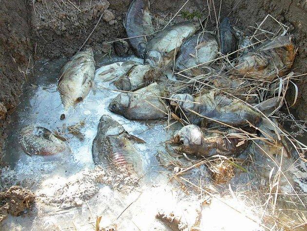 Rybáři denně vytáhnou z vody několik mrtvých ryb.