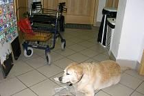 Pes nevidomé ženy skončil na policii