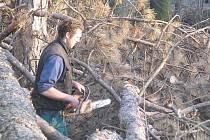 Nebezpečné stromy v Suchomastech