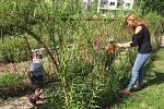 Děti ve školkách Pod Homolkou a v Tovární ulici si mohou naplno užít nových přírodních zahrad.