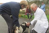 Očkování psů proti vzteklině ve Žloukovicích