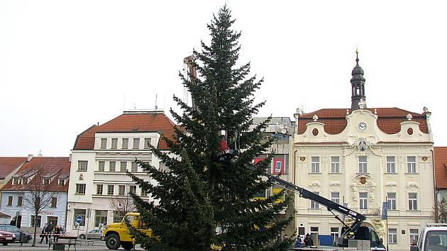 Berounské náměstí zdobí strom z Loděnice