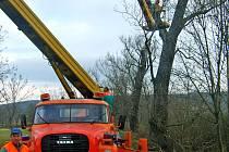 Správa a údržba silnic Kladno provedla údržbu aleje mezi Osovem a Lážovicem. Prozatím jen částečnou