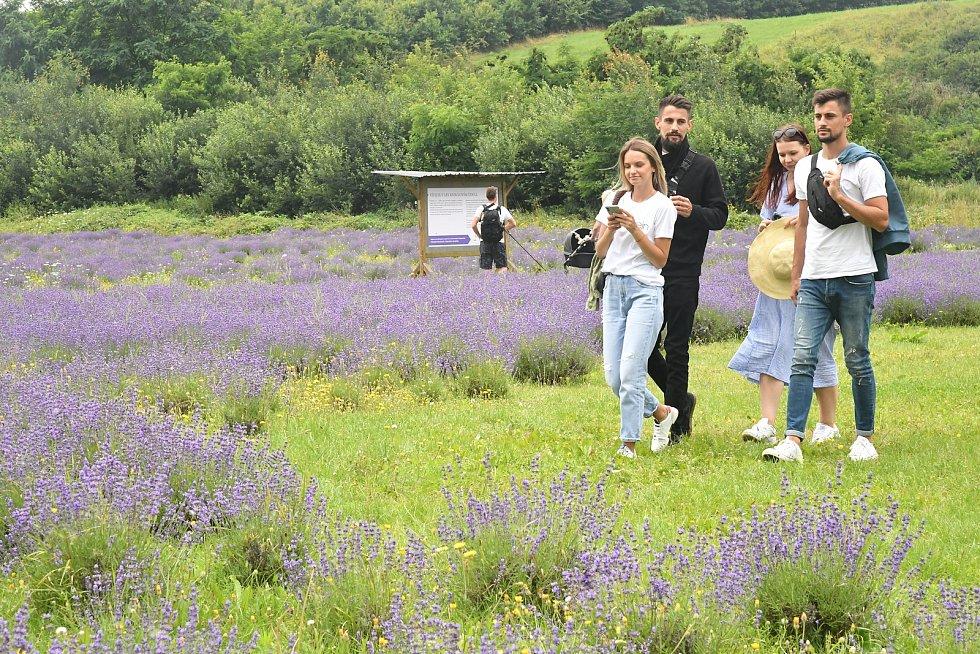Z levandulového údolí poblíž Chodouně na Berounsku.