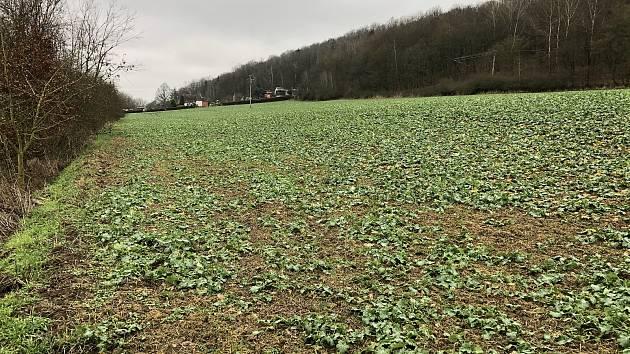 Zemědělská plocha, která je součástí návrhu k zastavění (v pozadí je vidět hranice chatové oblasti)