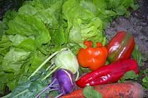 Zelenina ze zahrádky