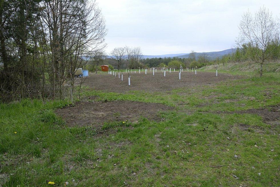 Nový ovocný sad se nachází u dětského hřiště.