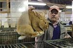 Tradiční výstava suchomastských chovatelů domácího zvířectva přilákala stovky návštěvníků.