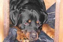 Po silvestrovské oslavě končí řada psů v útulcích
