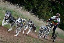 Závody psích spřežení se konají pod Točníkem