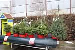 K vánočním svátků patří živý stromek, umělým už odzvonilo. Největší poptávka je po jedlích.