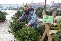 Lidé kupují hlavně vysoké stromky.