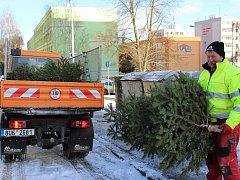 Vánoční stromy končí u kontejneru