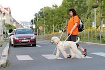 Výcvik psů pro hendikepované