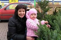 Začal prodej vánočních stromků