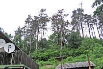 Stromy ohrožují suchomastské občany