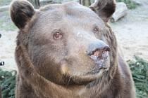 Medvědi z berounské Městské hory slavili 15. narozeniny.