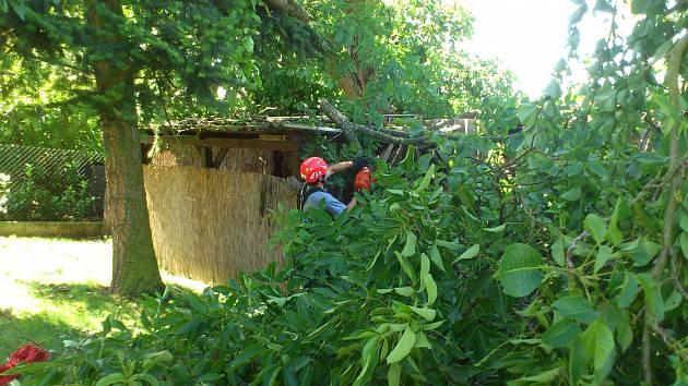 Vítr kácel stromy