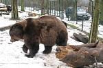 Berounští medvědi oslavili jedenácté narozeniny.
