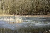 Rybník Drebec po rekonstrukci. Únor 2021.