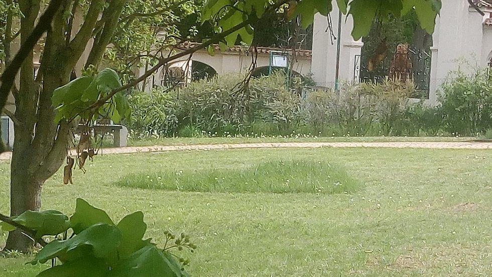 Na snímku srdce vzniklé na sklonku dubna při sečení trávníku v parku před Domovem seniorů T. G. Masaryka v Berouně.
