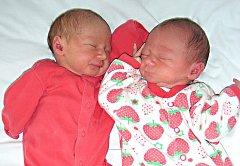 Dvojnásobnou radost mají manželé Jana a Jiří Hřebíčkovi z Berouna, kterým se 31. července 2014 narodila dvojčátka, dcerky Viktorie a Leontýna. Viktorka se narodila jako první a vážila 2,41 kg. Leontýnky porodní míra byla 2,49 kg. Na fotografii je Leontýnk