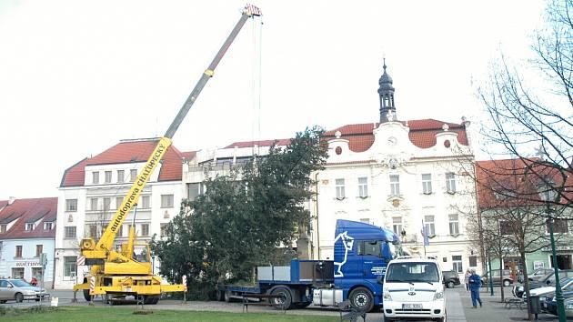 Instalace vánočního stromu na Husově náměstí v Berouně. /Ilustrační foto