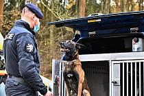 Policejní pes Fantom.