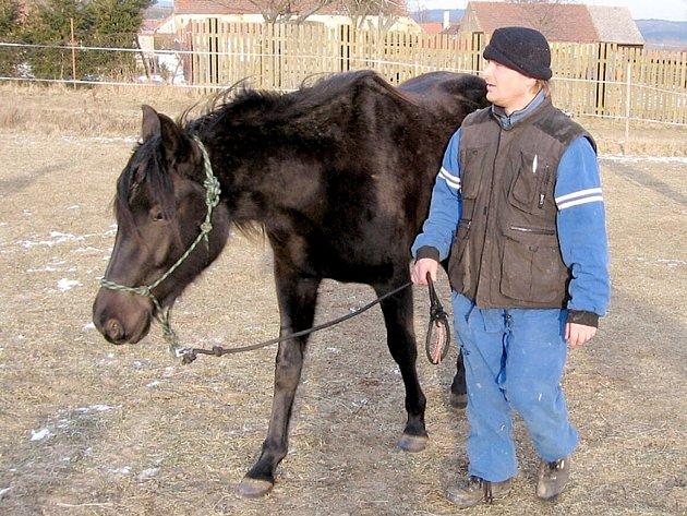 Charitativní akce ve Zvířecí pohodě e Bzové pomůže i vysloužilým koním