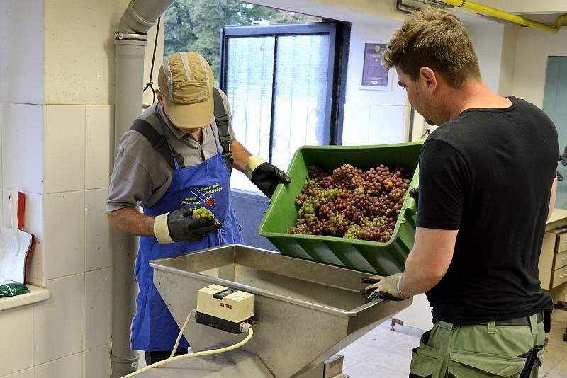 Zpracování hroznového vína na Karlštejně.