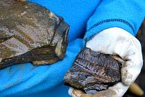 Z výpravy po stopách trilobitů. Ilustrační foto.