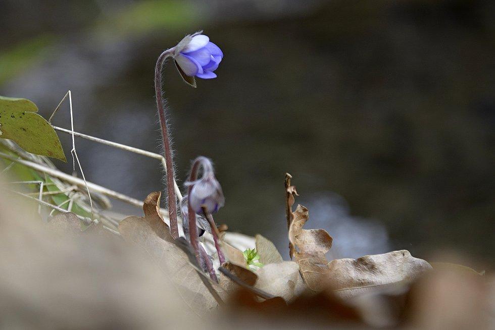 Jaro v národní přírodní rezervaci Koda.