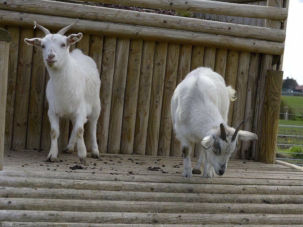 Zvířata na Statku u Merlina v Chyňavě.