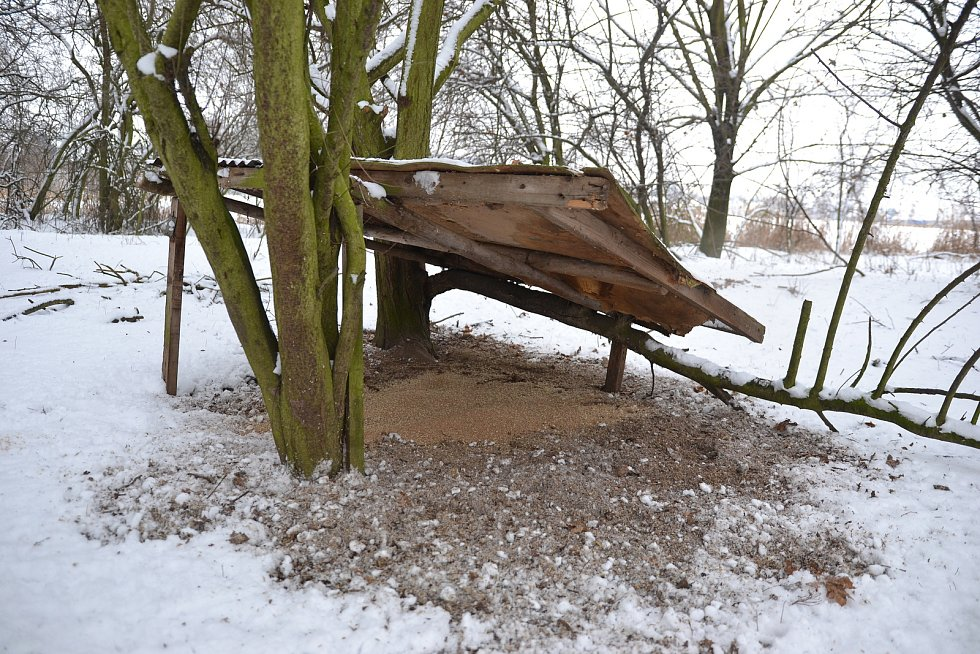Přikrmování lesní zvěře v zimě. Ilustrační foto.