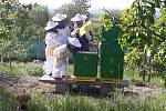 Včelaření. Ilustrační foto.