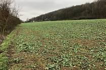 Lokalita Na Ptáku. Zemědělská plocha, která je součástí návrhu k zastavění (v pozadí je vidět hranice chatové oblasti).