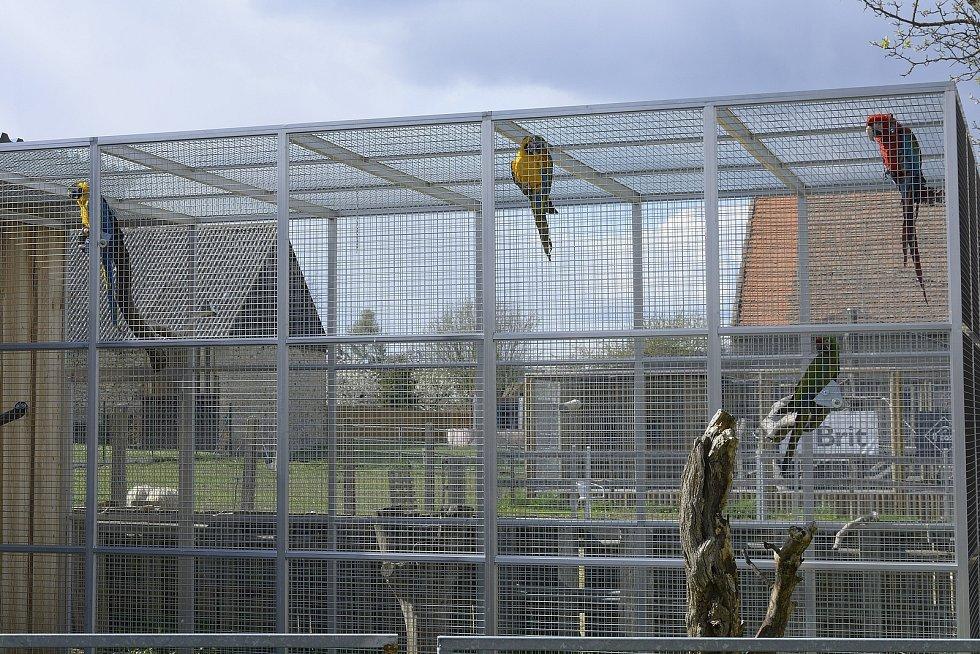 Papoušci na Statku u Merlina v Chyňavě.