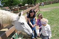 Pohodový den s koňmi ve Bzové
