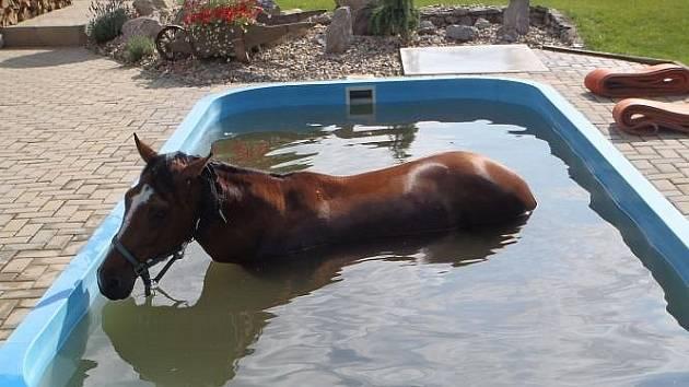 Kobyla skončila v bazénu rodinného domku.