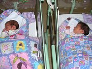 DVOJČÁTKA, holčičky Julie a Jasmína se narodila v měsíci říjnu 2017 v hořovické porodnici. Rodiče si své prvorozené dcerky, Julinku a Jasmínku, odvezli domů do Králova Dvora.