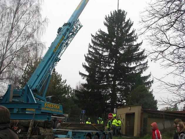 Vánoční strom ze Zaječova bude stát na Staroměstském náměstí v Praze