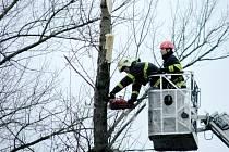 Hasiči museli odstranit poškozené stromy na hořovickém sídlišti Karla Sezimy