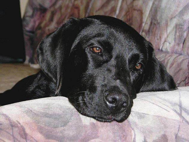 Pes může být mazlíček, ale stále zůstává šelmou