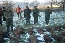 Myslivci zastřelili desítky divočáků