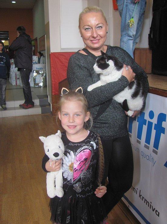 Mezinárodní výstava koček ve Zdicích.