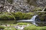 Národní přírodní rezervace Koda na Berounsku.