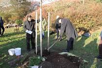 V Berouně zasadili v Parku přátelství strom reformace.