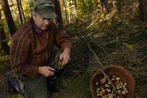 Na houby vždy s ostražitostí. Nikdy se nevydávejte hluboko do lesa bez oznámení druhým. Na lov nejlépe s mobilním telefonem