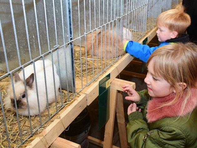 Speciální výstava zakrslých králíků v Králově Dvoře.